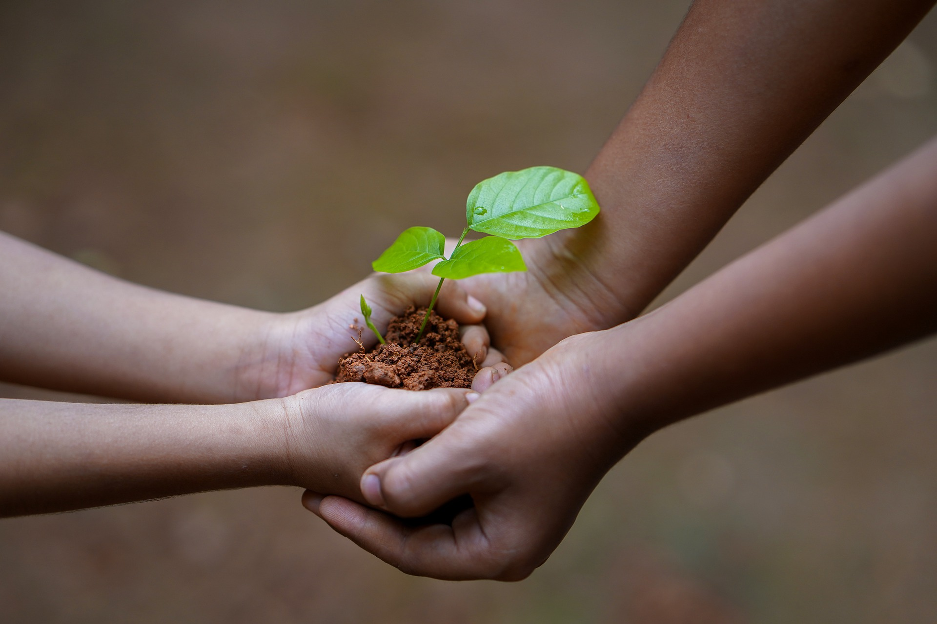 An adult and a child both holding a sapling